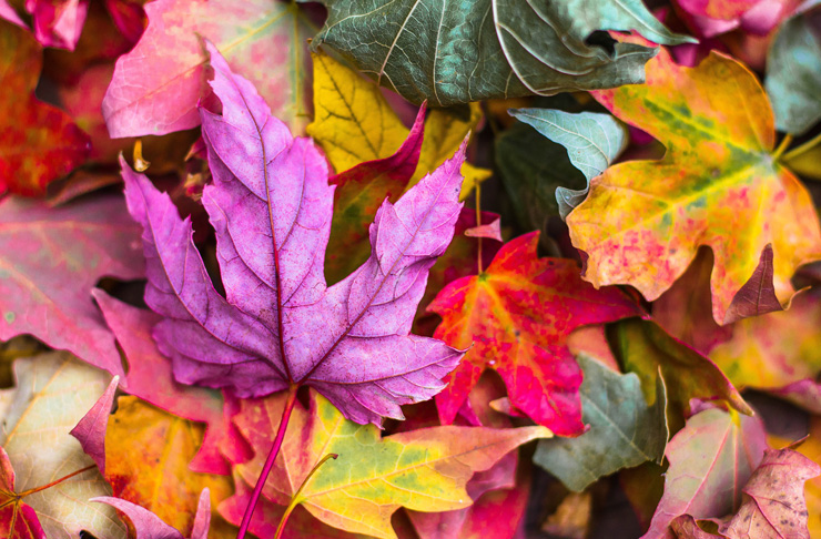 Image result for autumn leaves