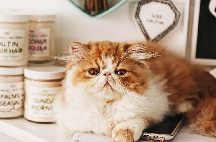 Cats With Jobs | Meet Australia's Busiest (And Fluffiest) Kitty