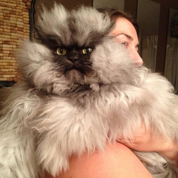 The Cool Cats of Instagram | Melbourne | The Urban List